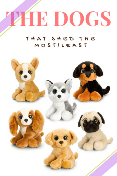 six little toy dogs