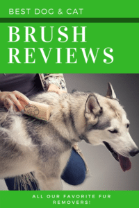 brushing dog's hair